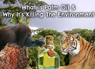 what-is-palm-oil