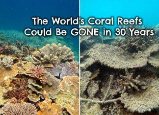 coral-reef-bleaching