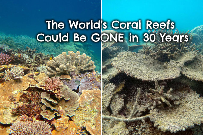 The World S Coral Reefs Could Be Gone In 30 Years Our