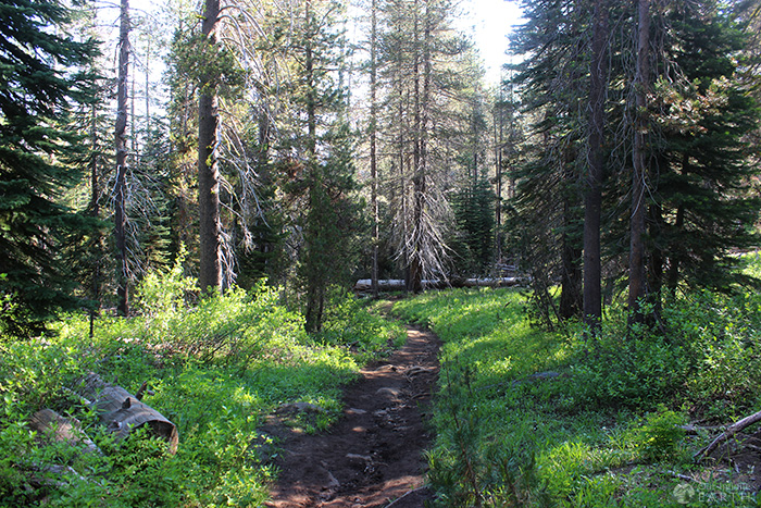 mcgurk-meadow-trail-yosemite