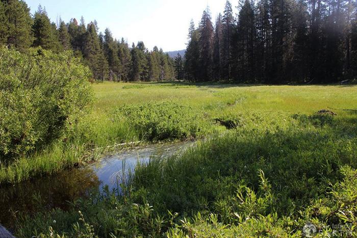 mcgurk-meadow-yosemite