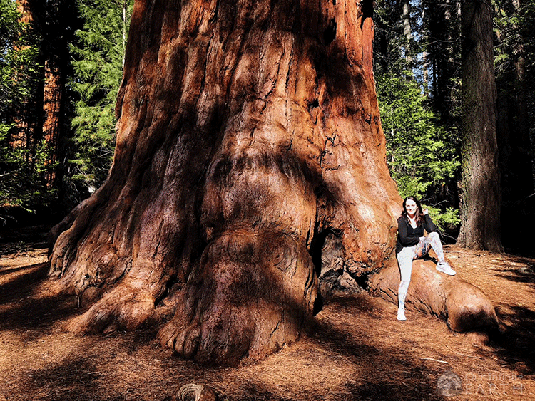 big-tree-trail-sequoia