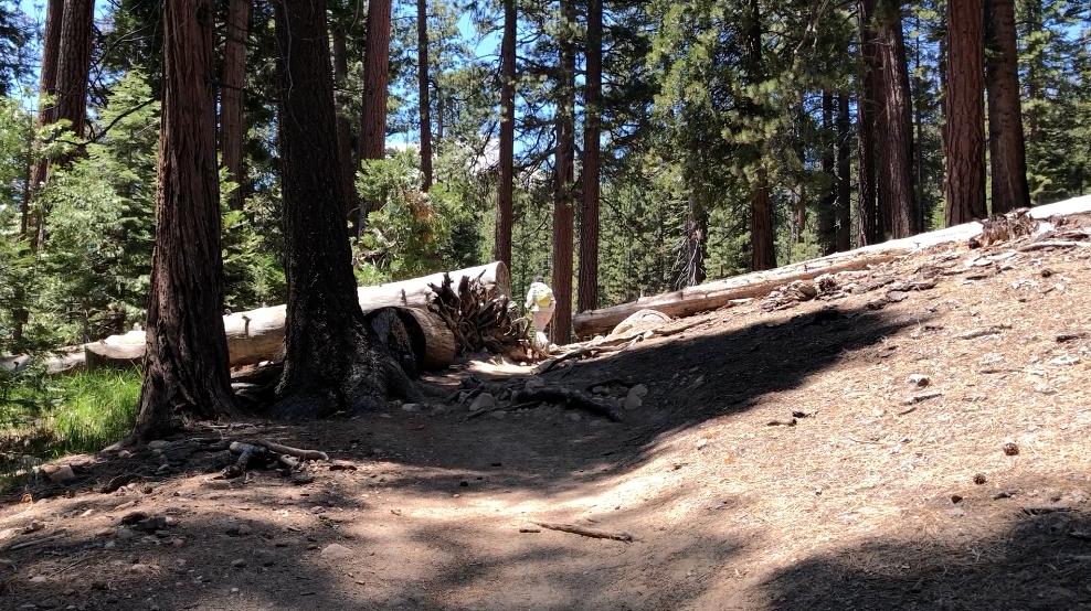 half-dome-hike-trail