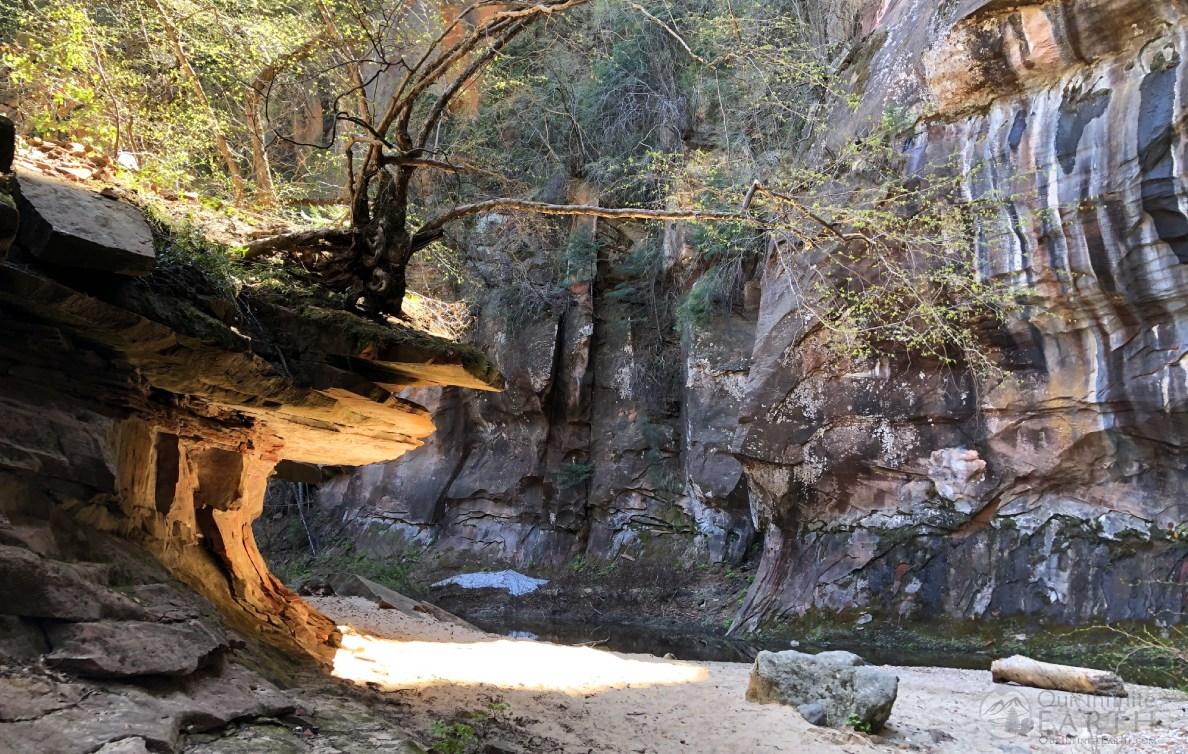 west-fork-oak-creek-tree-rock
