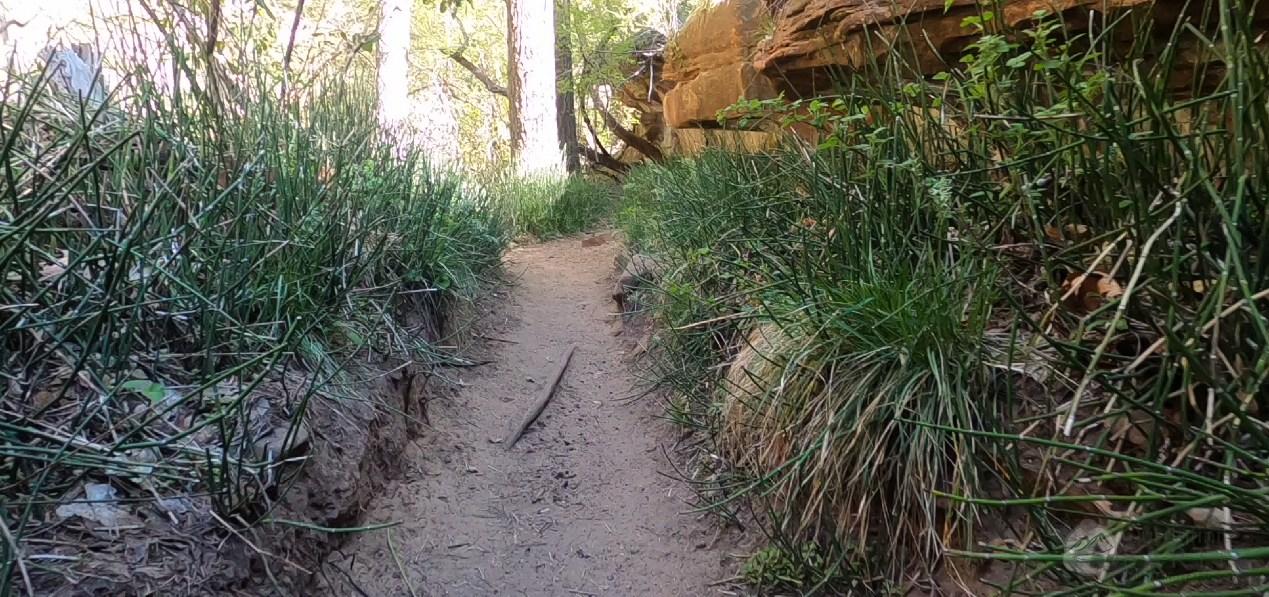 west-fork-reeds