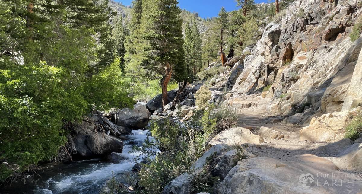 big-pine-next-to-creek